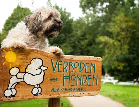 _verbodenvoorhonden